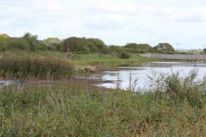 Seaton Wetlands in Devon